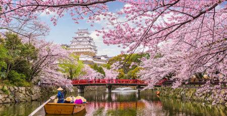 La fioritura dei ciliegi in Giappone sul fiume - Watabi