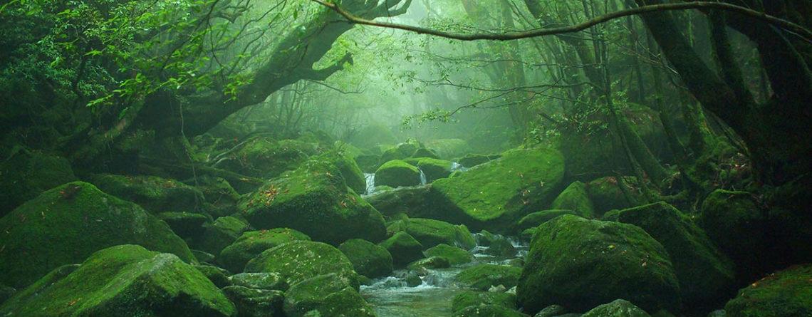 La verde foresta ricoperta di muschio di Yakushima - Watabi