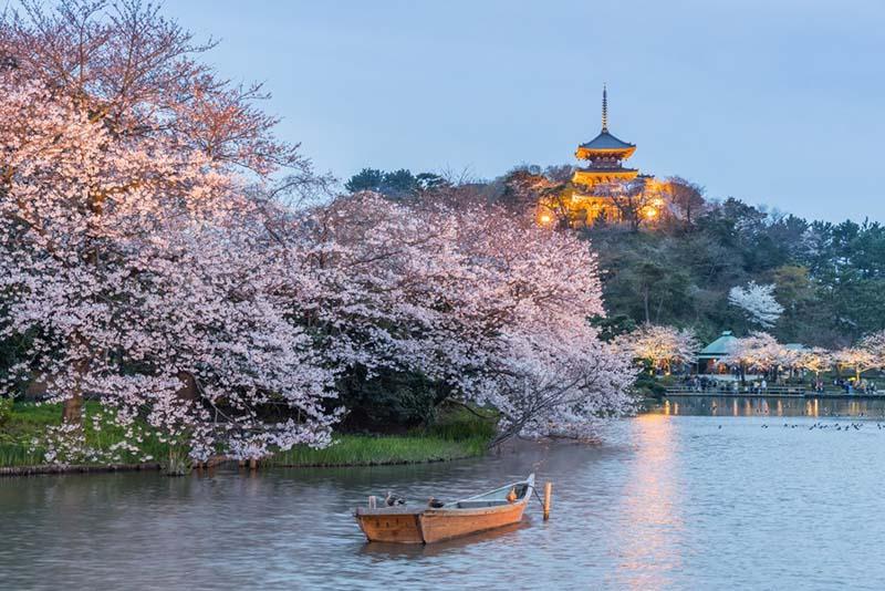 i giardini di yokohama durante la fioritura dei ciliegi