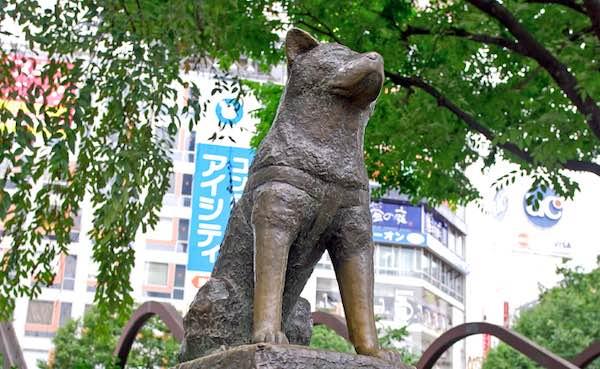 shibuya - la statua di hachiko