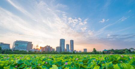 piante di loto a Ueno