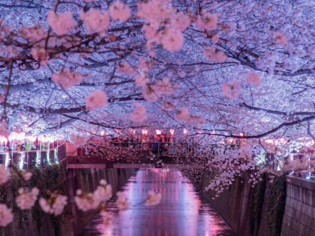 nakameguro canale fiorito